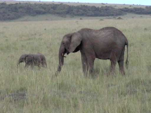 Elephant and Calf, Masai Mara National Park (Kenya)